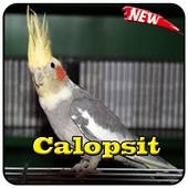 Cantos Do Calopsita Offline icon