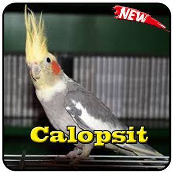 Cantos Do Calopsita Offline poster