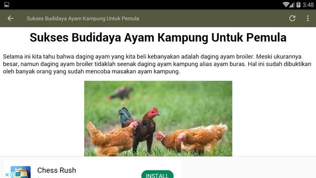 Cara Ternak Ayam Kampung screenshot 7