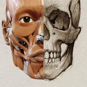 Anatomia 3D para artistas ícone