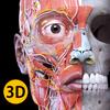 Anatomie - Atlas 3D icône