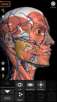 Anatomie - Atlas 3D capture d'écran 5