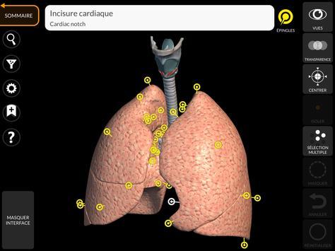 Anatomie - Atlas 3D capture d'écran 13