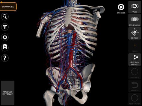 Anatomie - Atlas 3D capture d'écran 10