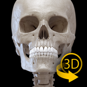 Skeleton | 3D Anatomy simgesi