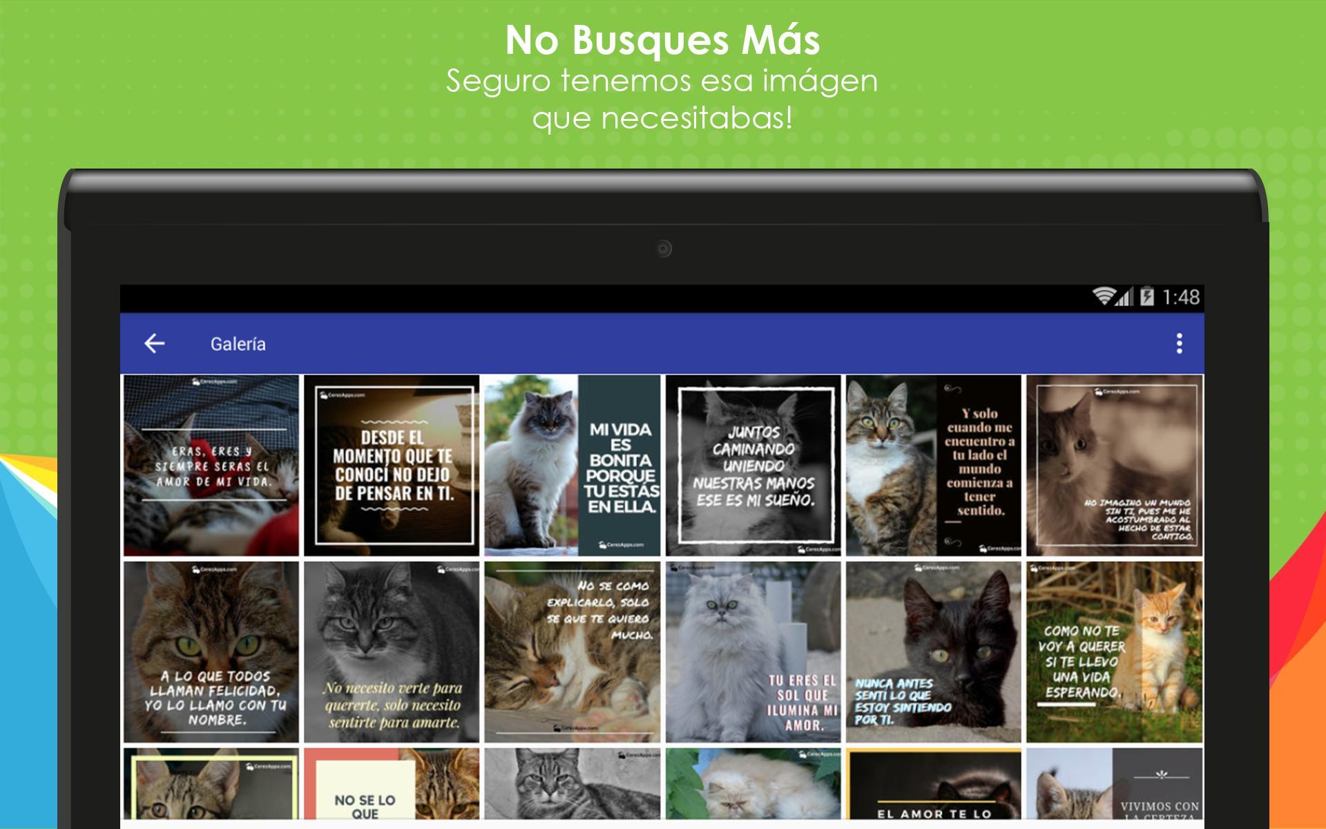 Frases De Amor Con Gatos Para Android Apk Baixar