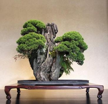 Bonsai Garden screenshot 13