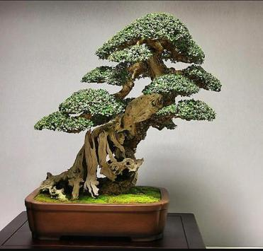 Bonsai Garden screenshot 4