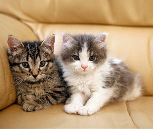 Kucing Kecil Dan Nama Kecil For Android Apk Download