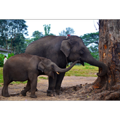 Baby Elephants Wallpapers Pictures HD icon
