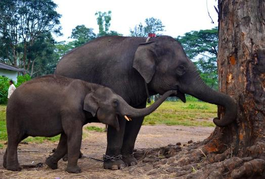 Baby Elephants Wallpapers Pictures HD poster