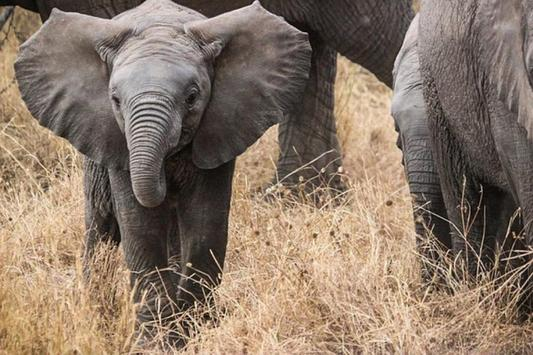 Baby Elephants Wallpapers Pictures HD screenshot 3