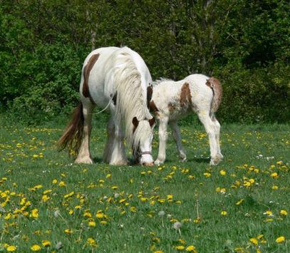 Baby Horses Wallpapers Pictures HD screenshot 3