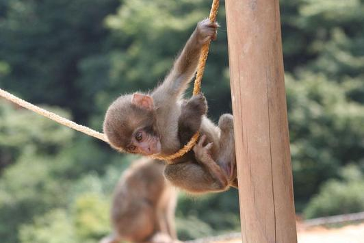Baby Monkeys Wallpapers Pictures HD poster