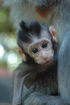 Baby Monkeys Wallpapers Pictures HD screenshot 1