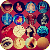Cool Facts About Human Body icon
