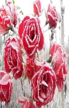 tulip rose wallpaper screenshot 2