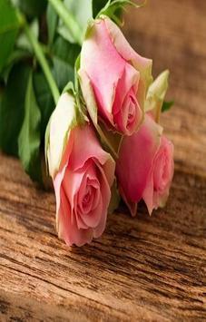 tulip rose wallpaper screenshot 5