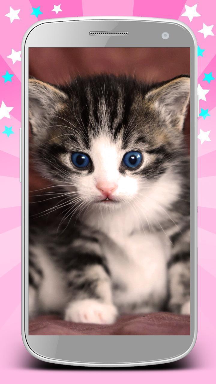 Wallpaper Girly Latar Belakang Lucu Dan Indah For Android
