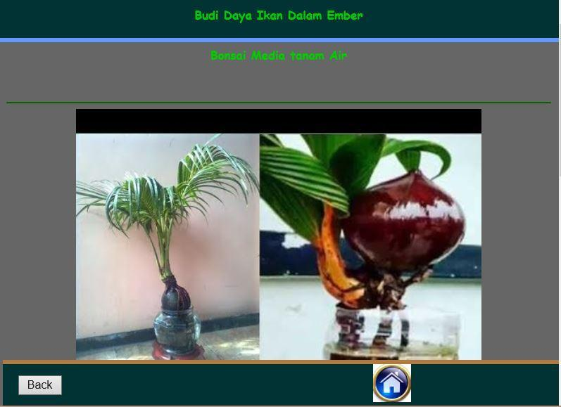 Cara Membuat Bonsai Kelapa For Android Apk Download