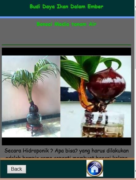 Cara Membuat Bonsai Kelapa For Android Apk Download