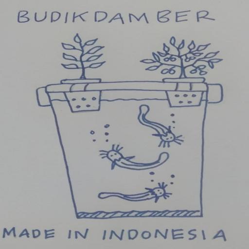 Cara Budidaya Ikan Lele Di Ember Infoakuakultur Com