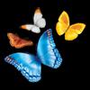 myChildren's icône