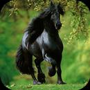 Black Horse Wallpapers HD APK