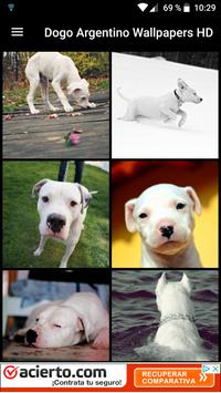 Dogo Argentino Wallpapers HD poster