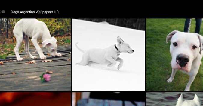 Dogo Argentino Wallpapers HD screenshot 4