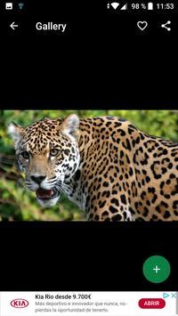 Jaguar Wallpapers HD screenshot 3