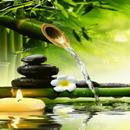Bamboo Water Live Wallpaper APK