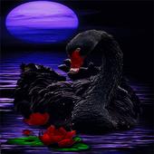 Black Swan Live Wallpaper icon
