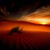 Desert Sunset Live Wallpaper icon