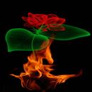 Fiery Rose Magic LWP APK