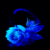 Lovely Blue Rose LWP icon