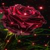 Magical Rose Live Wallpaper simgesi