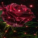 Magical Rose Live Wallpaper APK