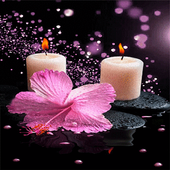 Pink Flower Candle LWP icon
