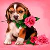 Puppy Rose Live Wallpaper simgesi
