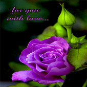 Purple Lovely Rose LWP icon