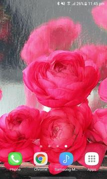 Rainy Pink Roses LWP screenshot 2