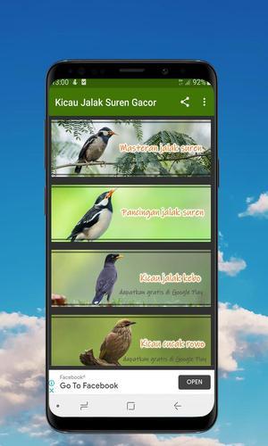 Kicau Jalak Suren Gacor Offline For Android Apk Download