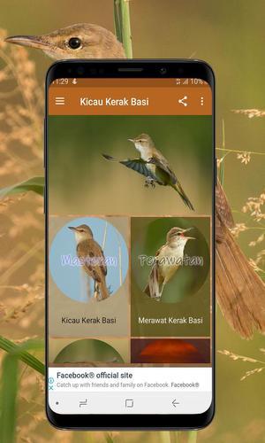 Kicau Kerak Basi For Android Apk Download