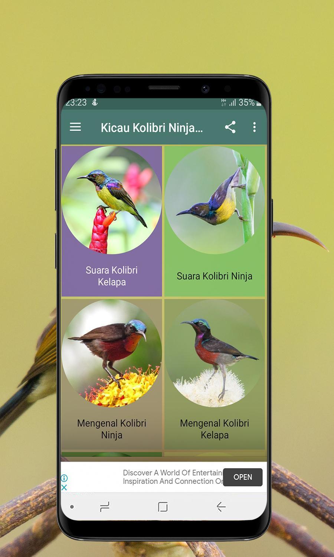 Kicau Kolibri Ninja Dan Kelapa Offline For Android Apk Download