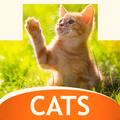 Wallpapers mit Katzen