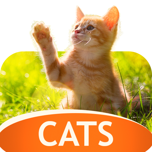 Wallpapers with cats