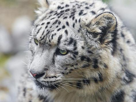Snow Leopard screenshot 3