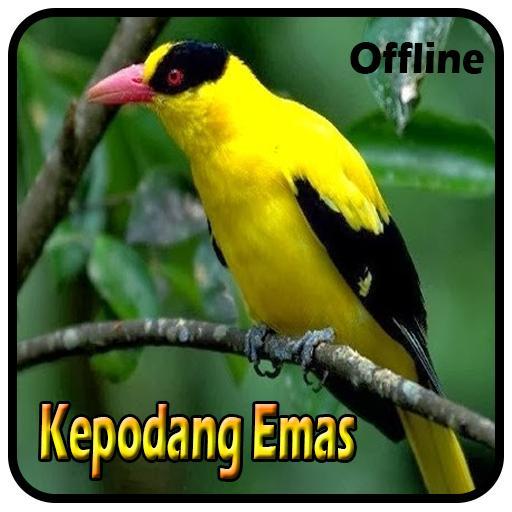 Burung Kepodang Emas Juara For Android Apk Download