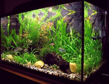 Unique aquarium design screenshot 1